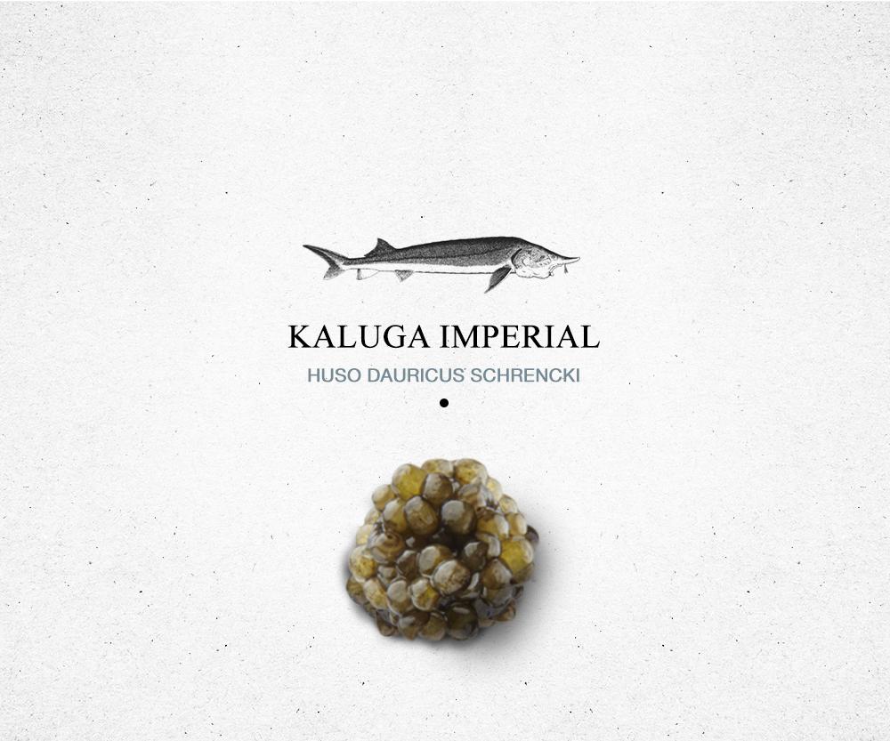 encyclopédie_kaluga_royale
