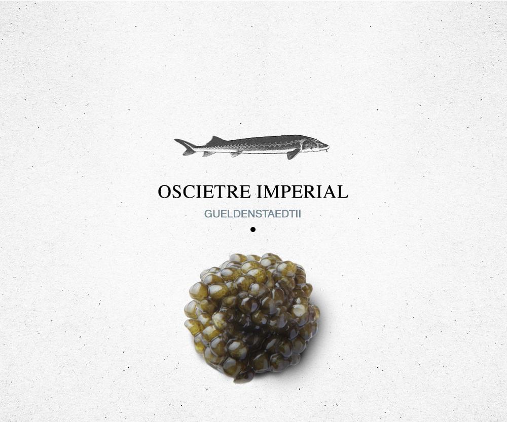 encyclopédie_oscietre_imperial