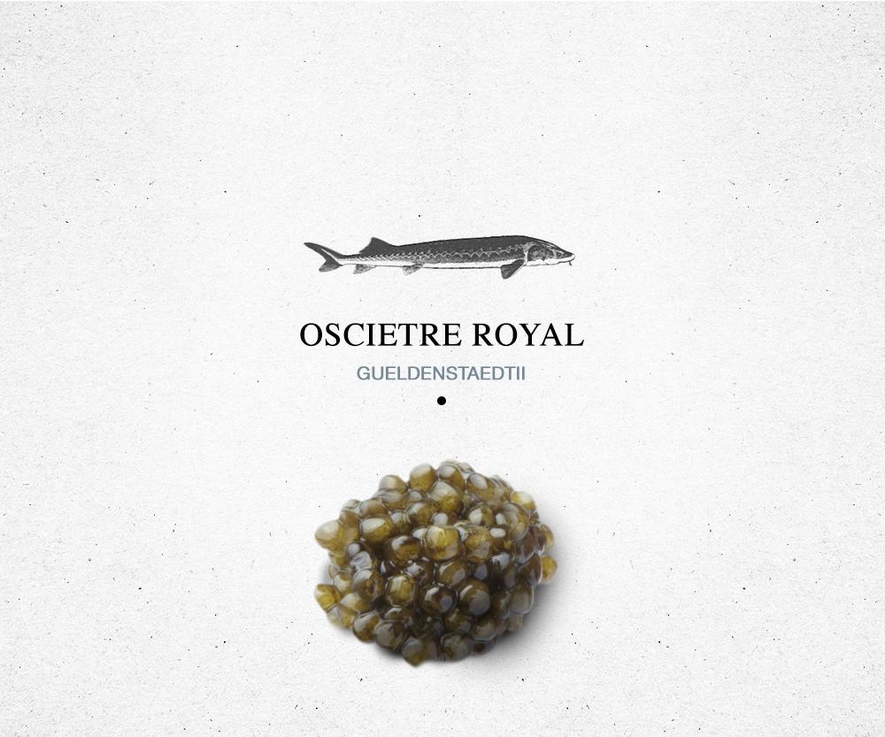 encyclopédie_oscietre_roayl