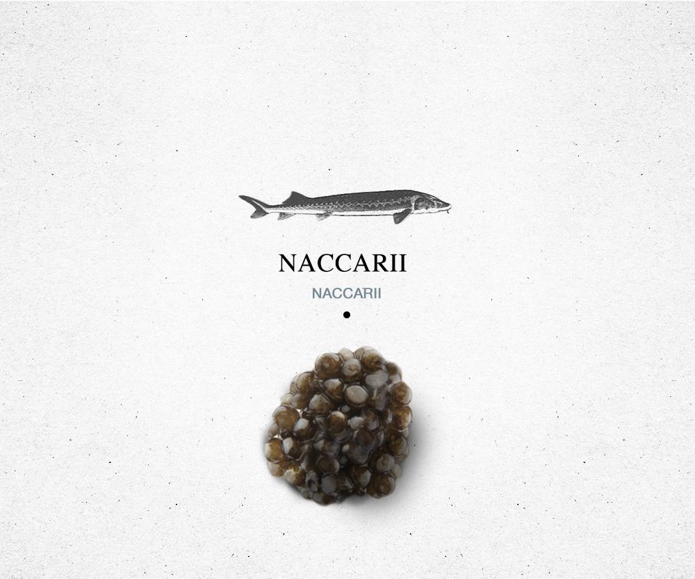 encyclopedie_naccarii